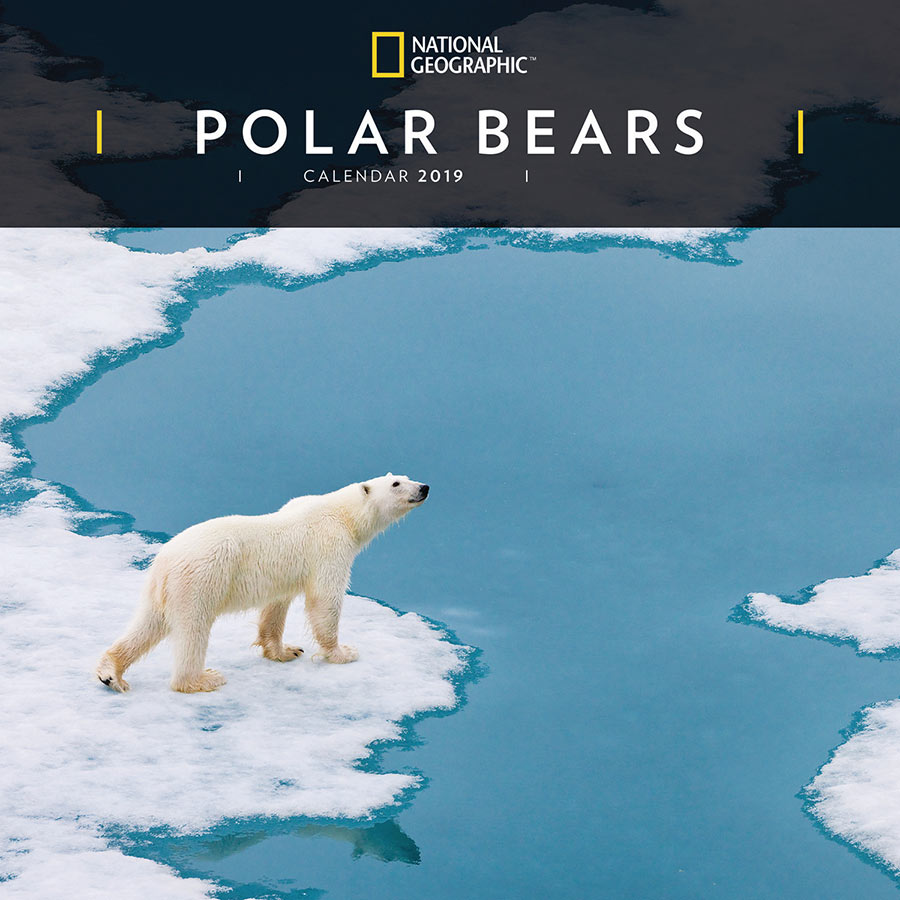 National Geographic Polar Bears 2019 Wall Calendar National Geographic