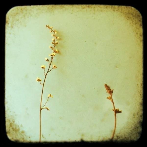 Coral Bells- Original Signed Fine Art Photograph