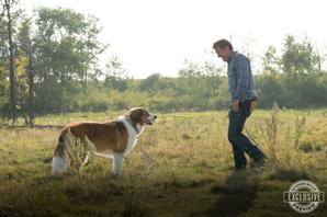Exclusive 'A Dog's Journey' Featurette: Joy of Dogs, As Explained By Humans