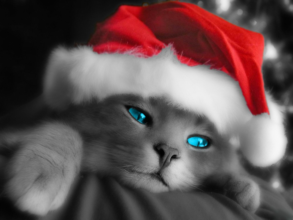 Holiday Kitty Wallpaper - Cats 1024x768 800x600