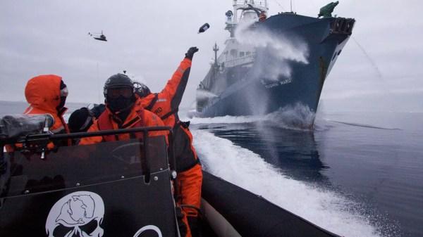 "U.S. Judge Calls Sea Shepherd Conservation Group ""Pirates"""