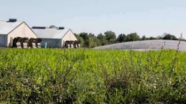 3-big-agriculture-is-trying-to-save-monarch-butterflies-813x457 Big agriculture helped destroy monarch butterfly habitats–now it's trying to save them Inspiration