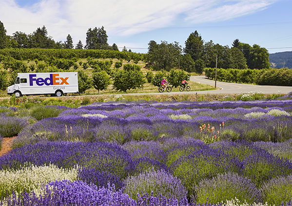 Fedex Ground Truck Driving On Winding Road Amid Field Of Purple Flowers