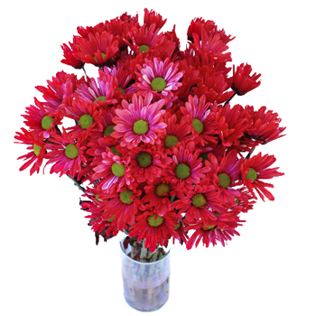 Daisy Red Tinted Bunch 350 9fb649a9