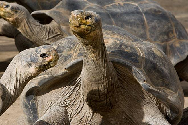 https://i1.wp.com/images.financialexpress.com/2016/09/tortoise-s.jpg?w=736
