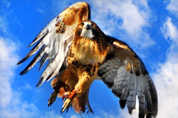 North Wind Red Tailed Hawk Art Prints for Sale
