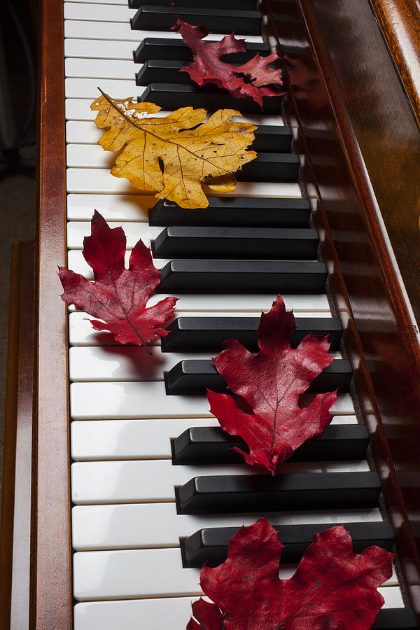 Autumn Leaves On Piano Photograph By Garry Gay
