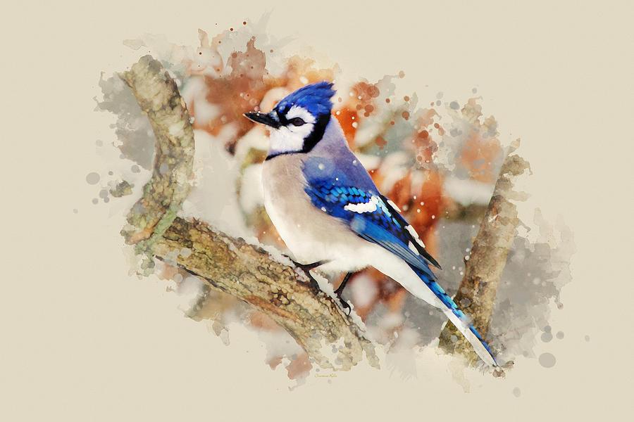 Beautiful Blue Jay - Buy Art Prints Online Watercolor Art for Sale