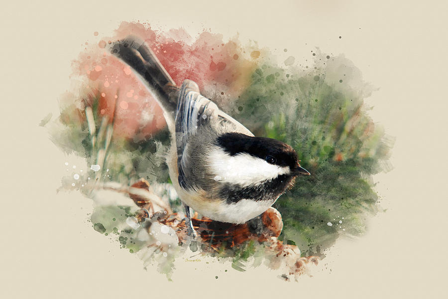 Beautiful Chickadee Watercolor Art by Christina Rollo