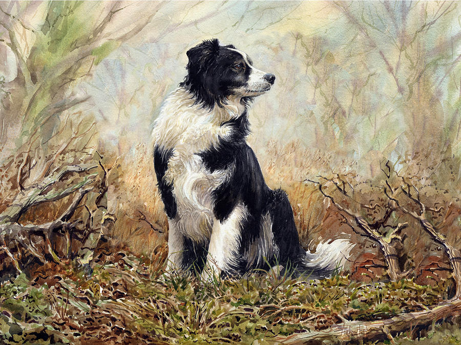 Border Collie Painting By Anthony Forster