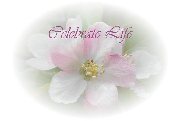 Celebrate Life Photograph by Judy Hall-Folde