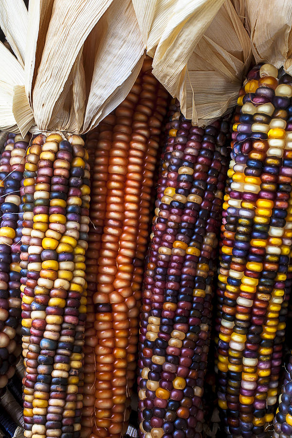 Indian Corn Close Up Photograph By Garry Gay