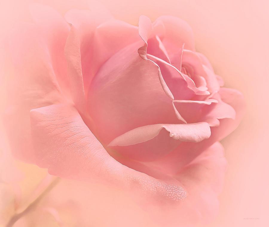 https://i1.wp.com/images.fineartamerica.com/images-medium-large-5/just-peachy-pink-rose-flower-jennie-marie-schell.jpg