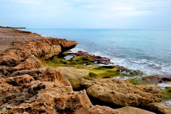 Mossy Shoreline Blowing Rocks Preserve Jupiter Florida ...
