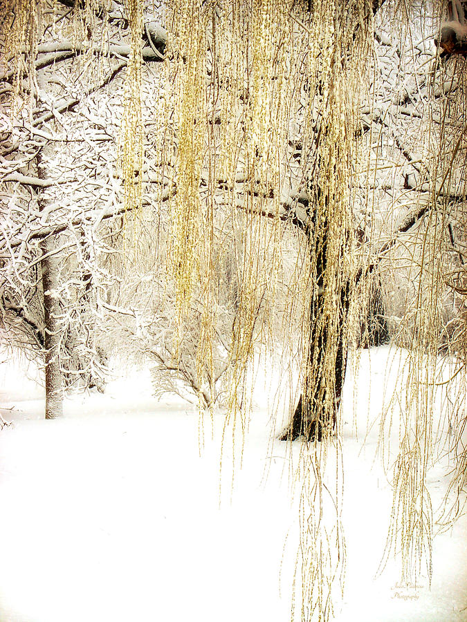 Winter Gold Photograph By Julie Palencia