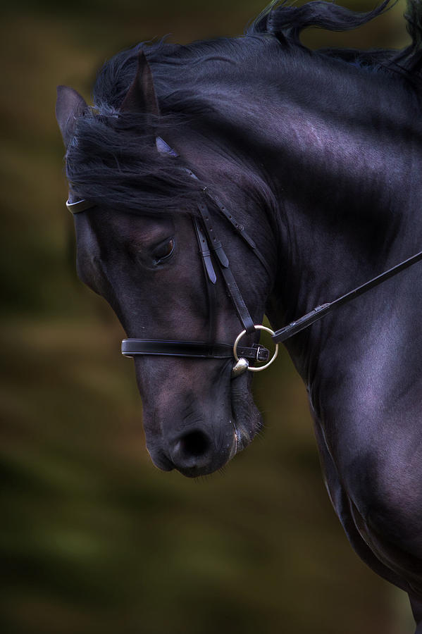 Dark Bay Horse Head Photograph By Ethiriel Photography