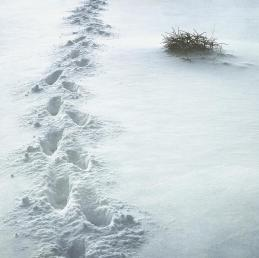 Footsteps in the snow Photograph by Sonya Kanelstrand
