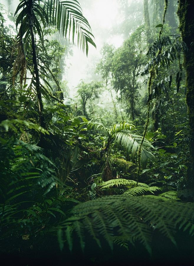 Jungle In Monteverde Cloud Forest Photograph By Axiom Photographic