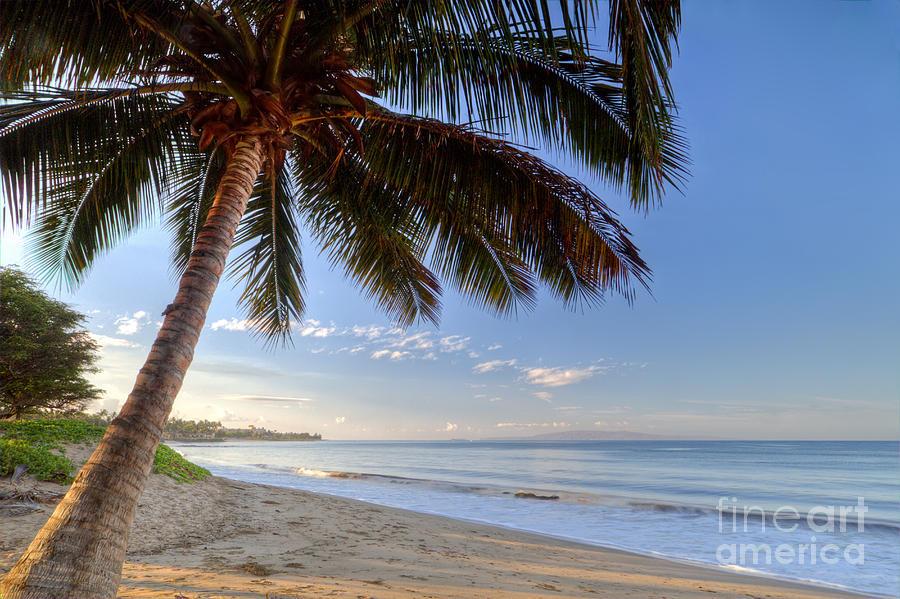 Kihei Maui Hawaii Sunrise Coconut Palm Photograph By