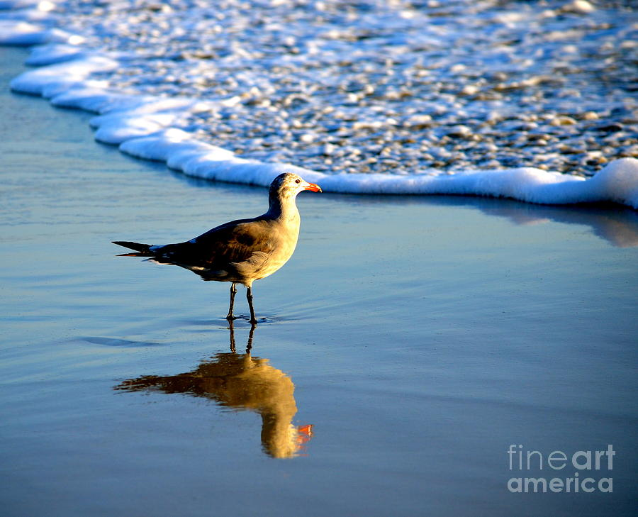 Reflection By The Sea Photograph By Johanne Peale