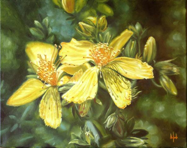 Image result for st john's wort painting