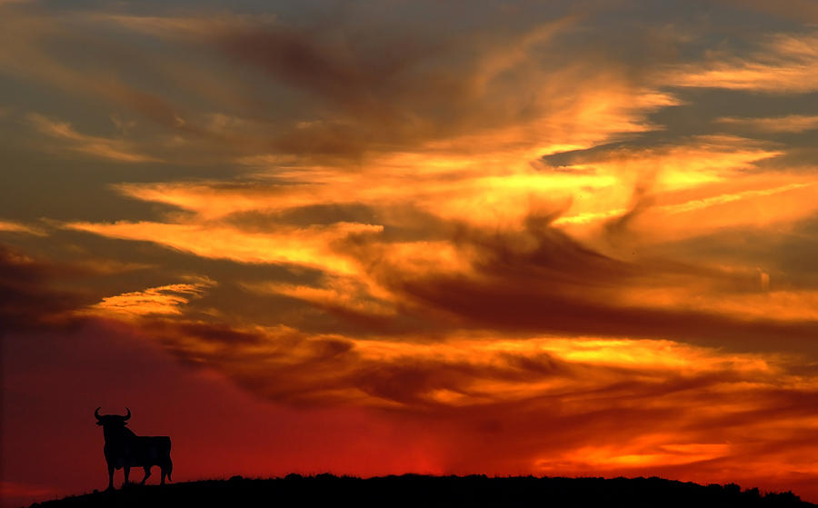 Sunset Bull Photograph By Cliff Norton