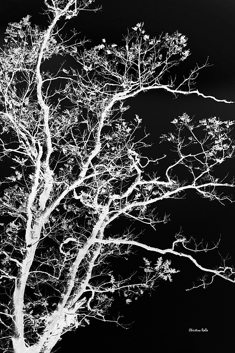 Black and White Tree Art Prints for Sale