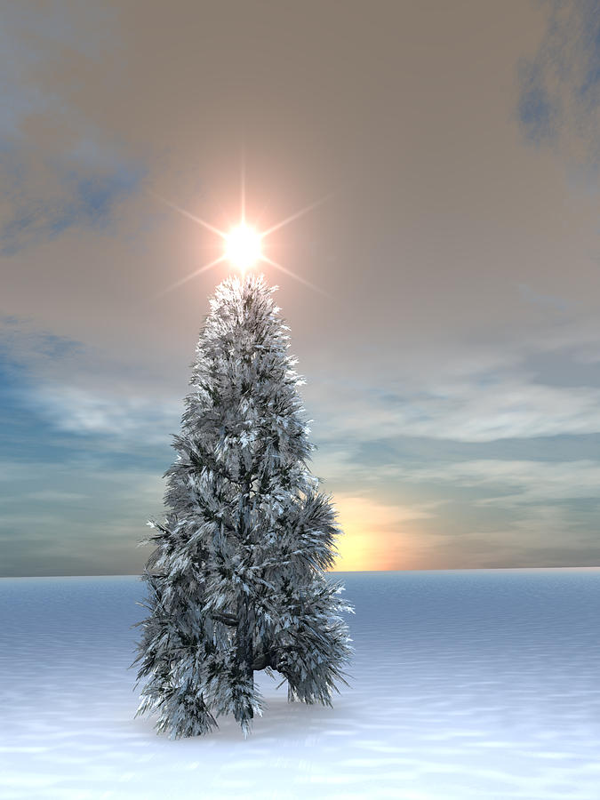 Christmas Tree Sunrise Digital Art By Dan Collier