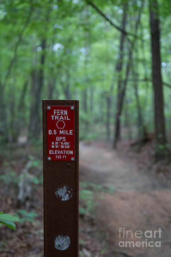 Learn about this scenic drive. Fern Trail Marker Photograph By Andy Miller