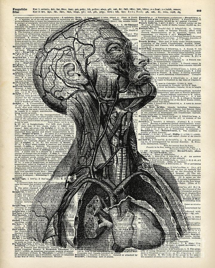 Medical Human Anatomy Drawing by Anna W