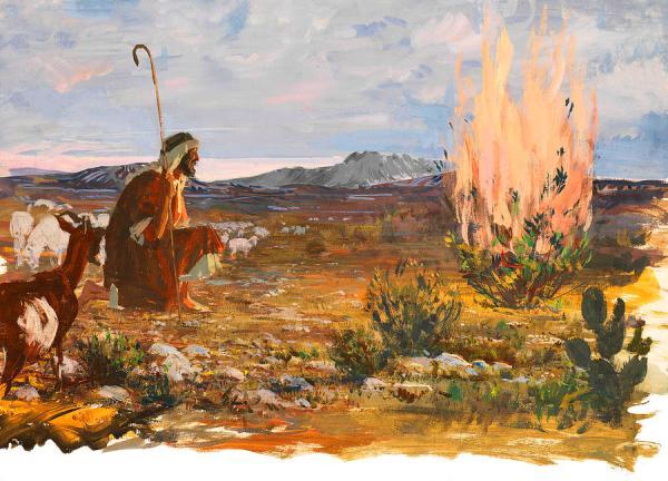burning bush # 17