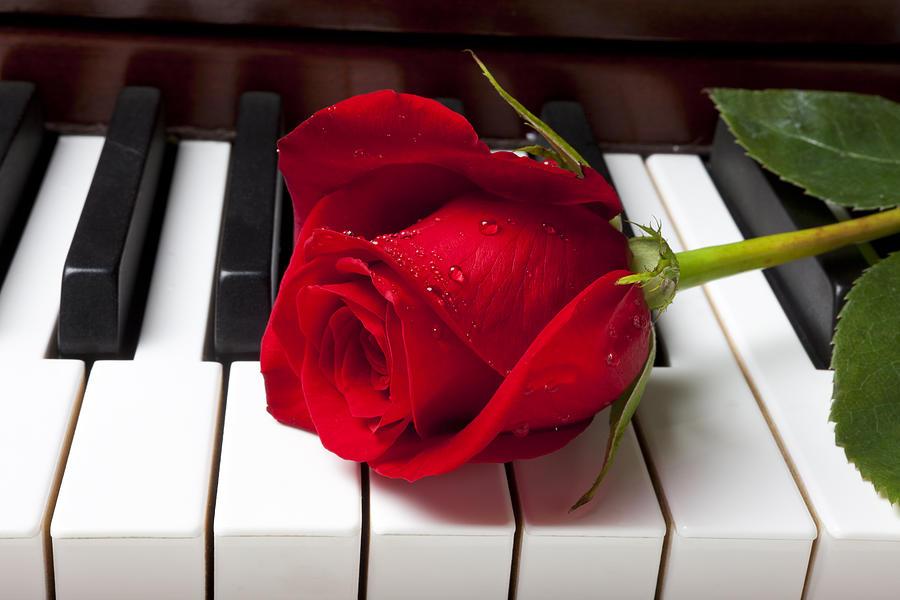 https://i1.wp.com/images.fineartamerica.com/images/artworkimages/mediumlarge/1/red-rose-on-piano-keys-garry-gay.jpg