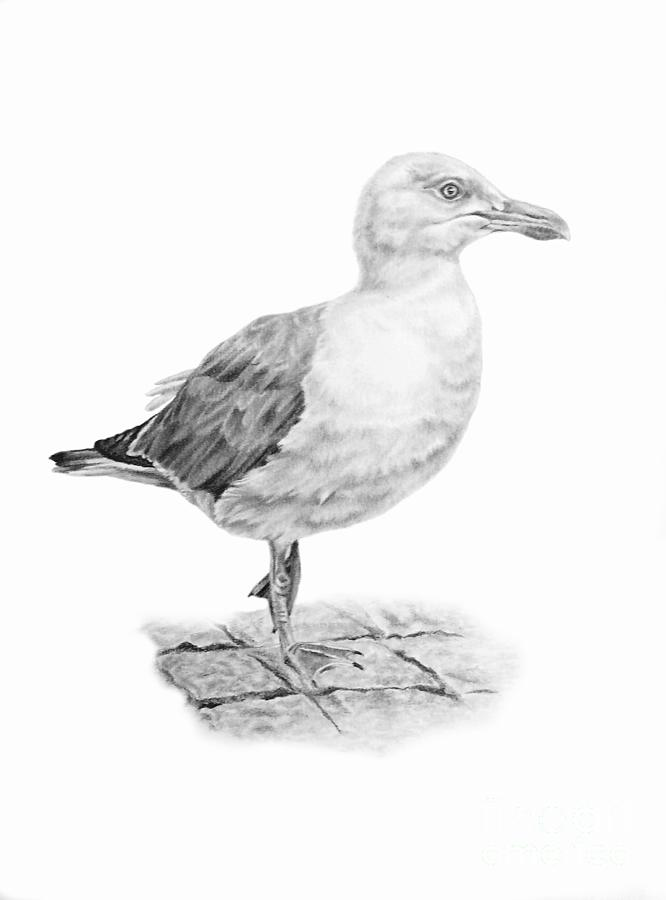 The Seagull Strut Drawing By Pencil Paws