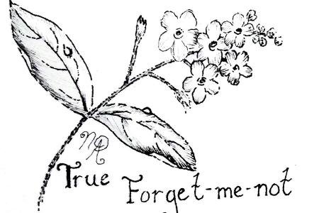 Forget Me Not Art Google Search Pinterest DeviantArt More Like Tattoo By RuneElf Flower Background Vector Images Over