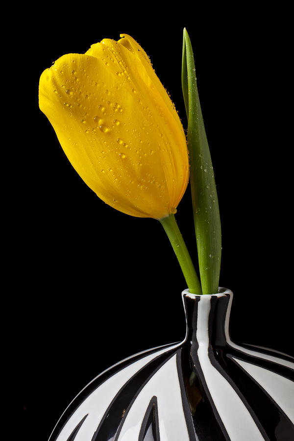 Yellow Tulip In Striped Vase Photograph By Garry Gay