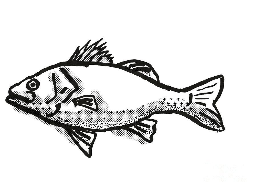 Australian Bass Fish Cartoon Retro Drawing Digital Art By Aloysius Patrimonio