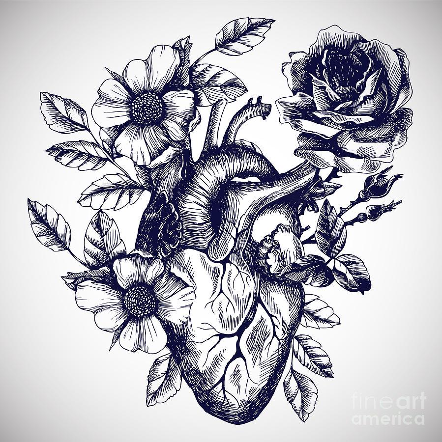 Blooming Anatomical Human Heart Vector Digital Art By Moopsi