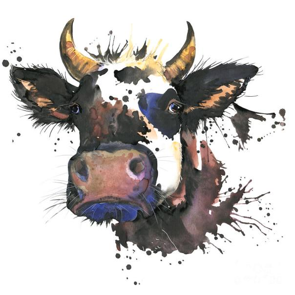 Cow Watercolor Illustration Farm Digital Art
