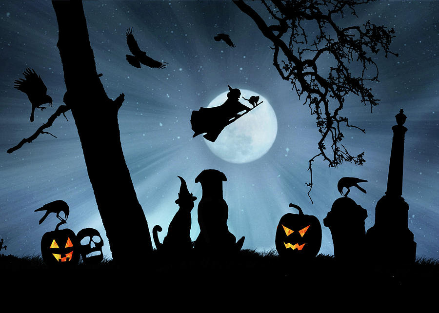 Super Cute Halloween Night With Dog And Cat Photograph By Stephanie Laird
