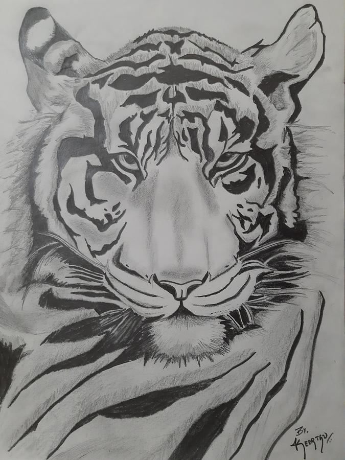 Tiger Sketch Drawing By Keetz Vish