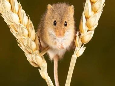 Mice Nick Fewings unsplash 640