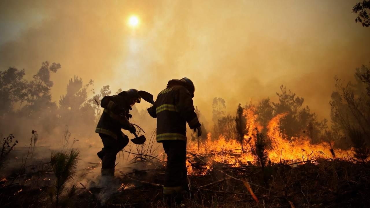 2021 should be the year humanity stops it war on nature pleads UN Sec-Gen Antonio Guterres- Technology News, Gadgetclock