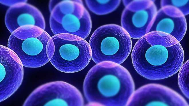 Process of transporting stem cell from donor to patient for a successful transplant- Technology News, Gadgetclock