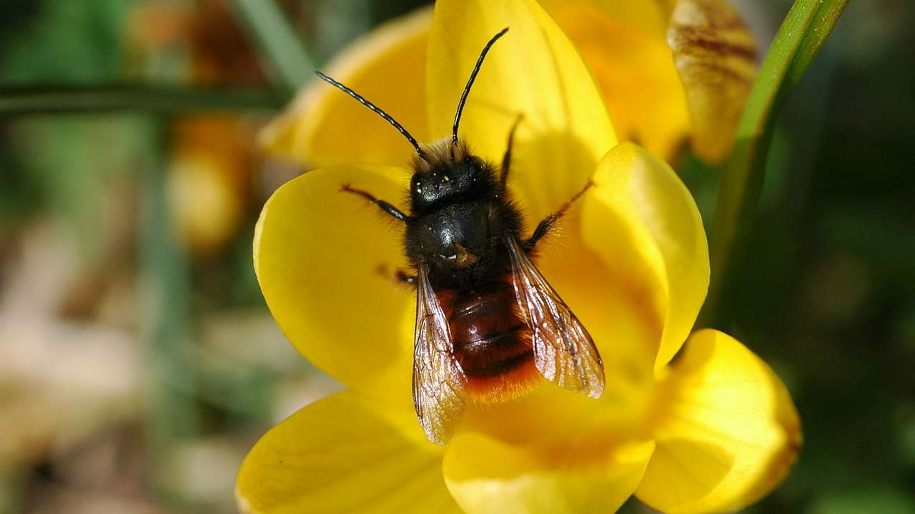 New map developed to show distribution of bee species, populations around the world- Technology News, Gadgetclock