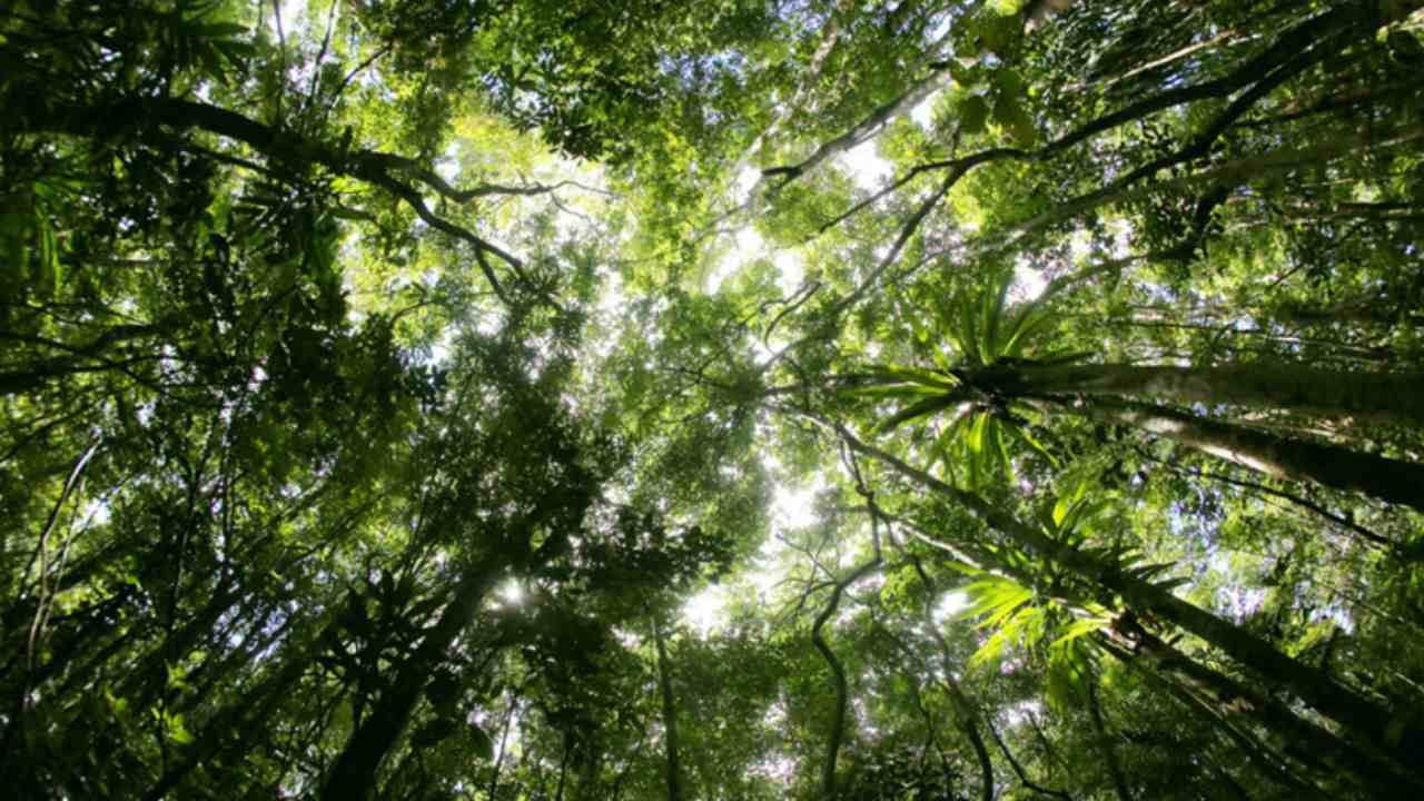 Forests, land ecosystems may go from being CO2 'sinks' to the 'source' by 2050- Technology News, Gadgetclock