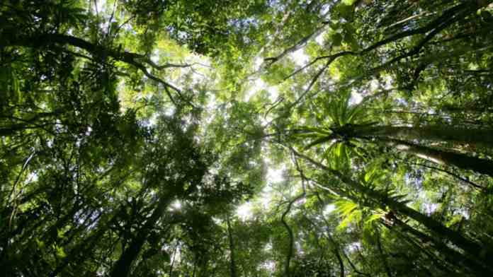 Carbon might boost forest, grassland growth but absorption capacity of soil decreases