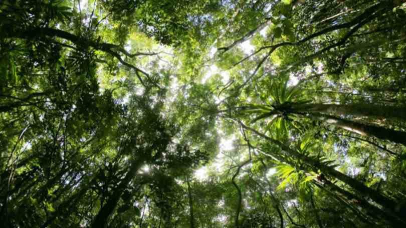 Forests, land ecosystems may go from being CO2 sinks to the source by 2050