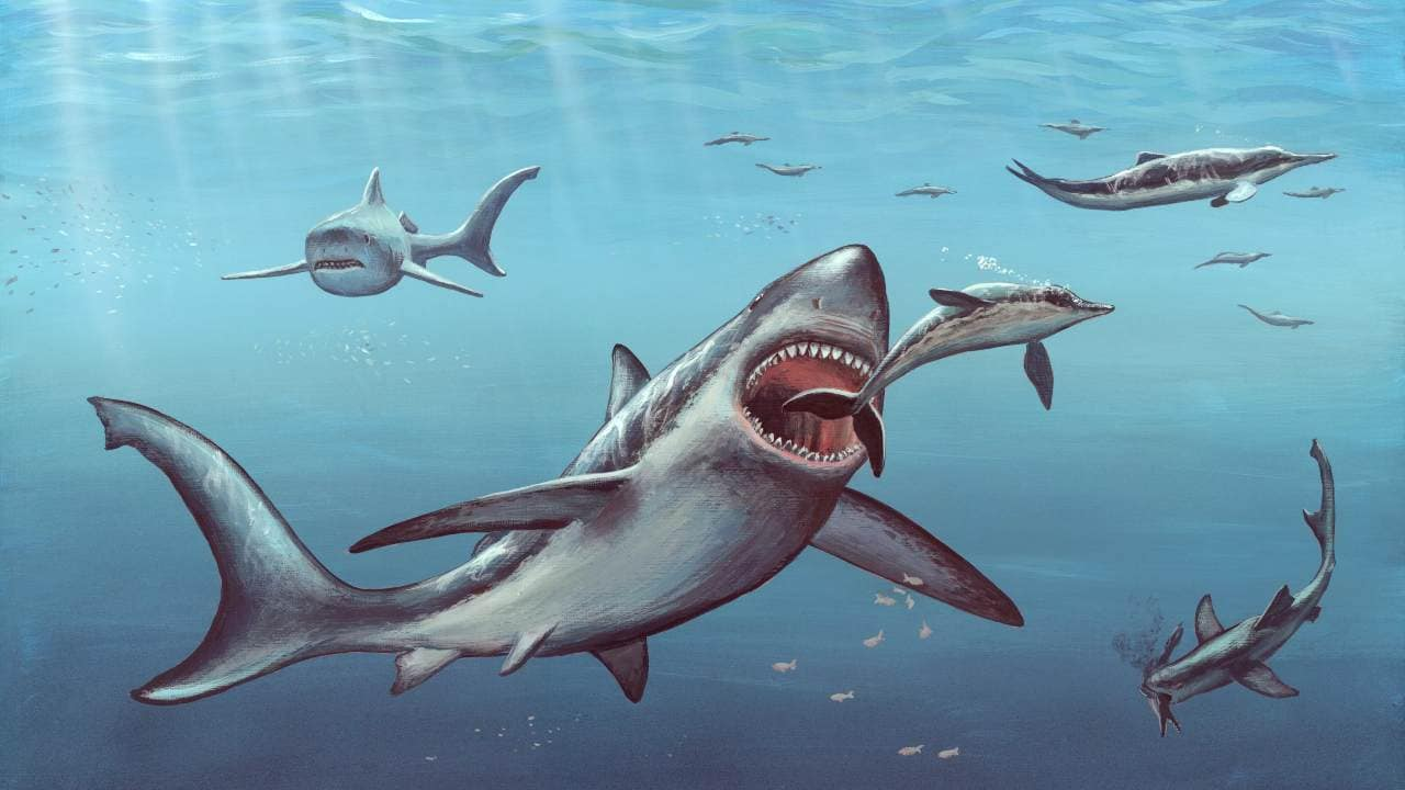 Megalodon shark fossils suggest that newborns were larger than adult humans: Study- Technology News, Gadgetclock