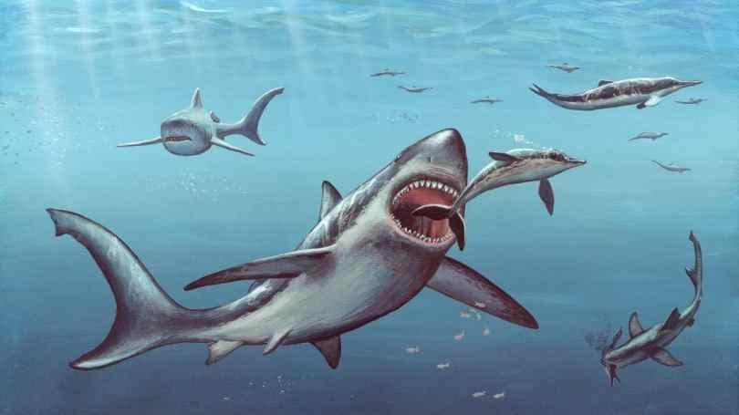 Megalodon shark fossils suggest that newborns were larger than adult humans: Study- Technology News, Gadgetclock