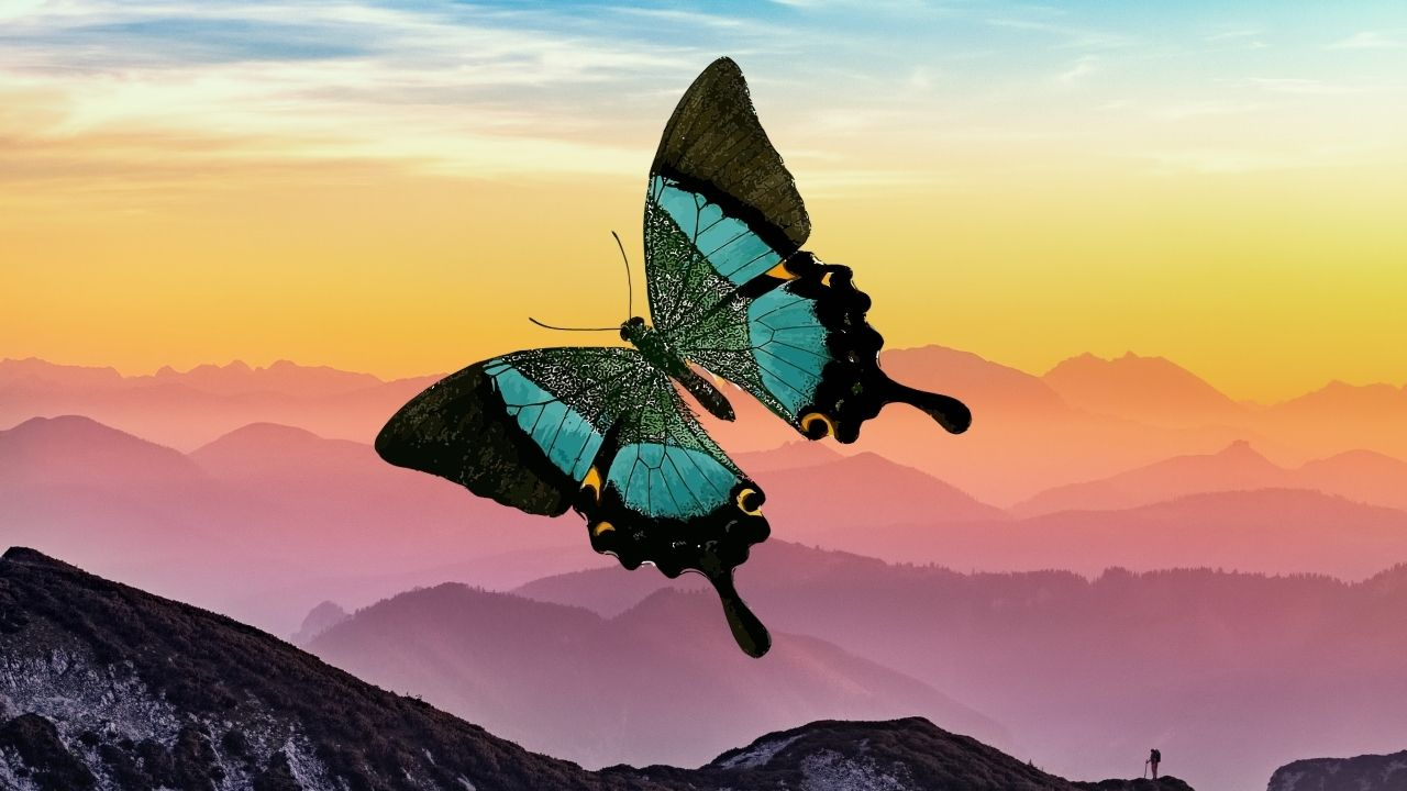 Butterfly wings are perfectly designed to give them a burst of jet propulsion- Technology News, Gadgetclock